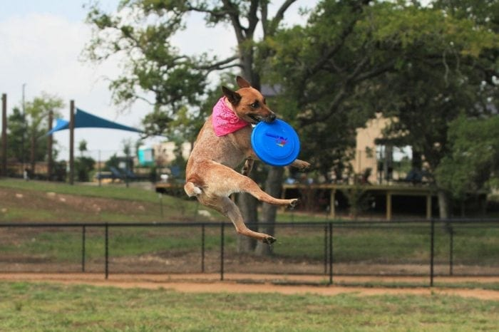 MorningStar Features a Dog Park For Dogs to Run and Play